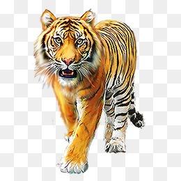 Tiger HD PNG