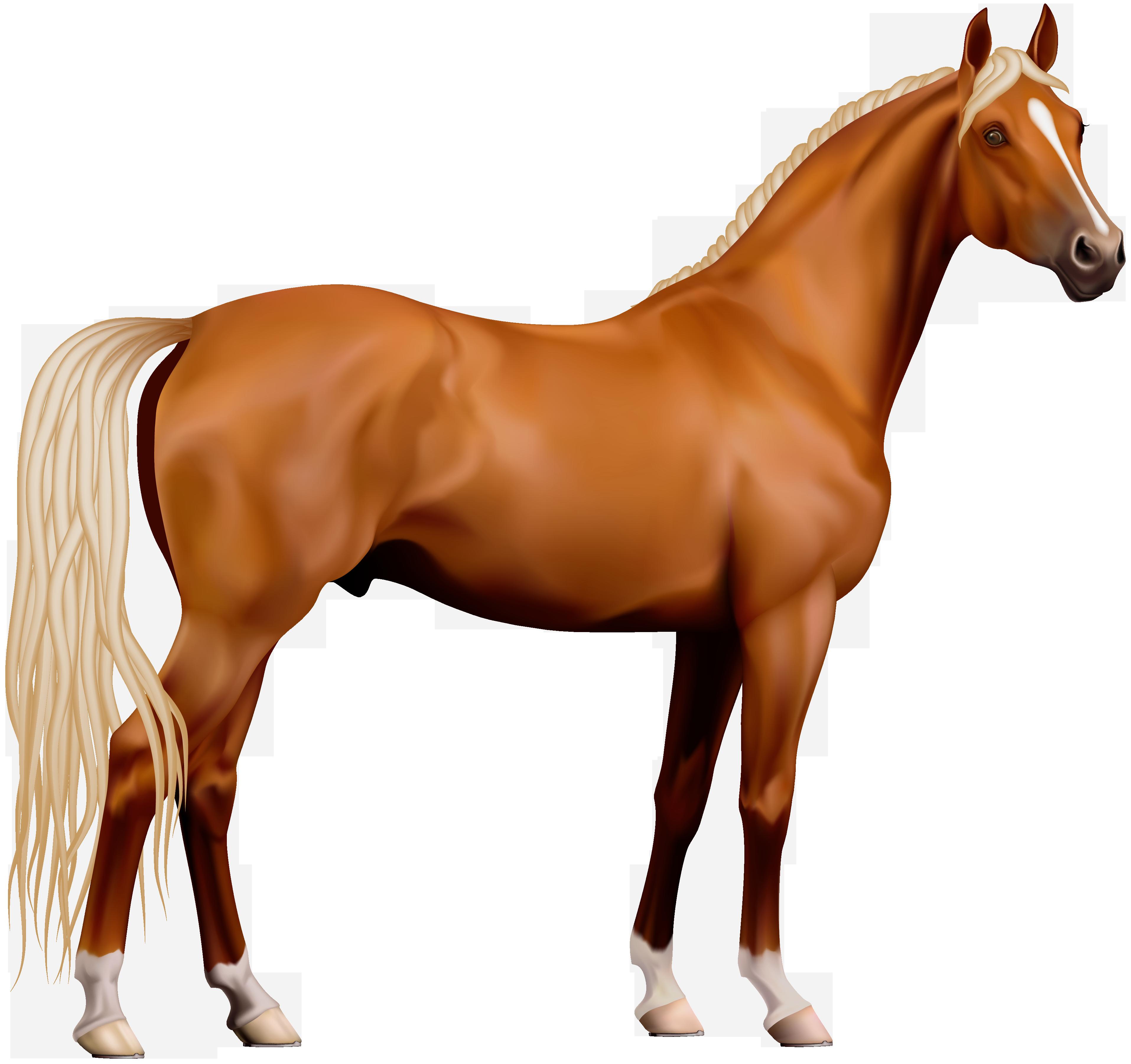 Transparent Horse Png Clipart - Horse, Transparent background PNG HD thumbnail
