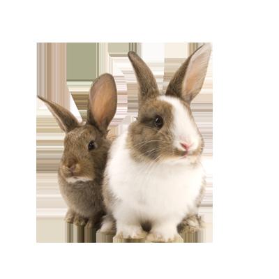 Transparent Pet Bunny Rabbit Png - Rabbit, Transparent background PNG HD thumbnail