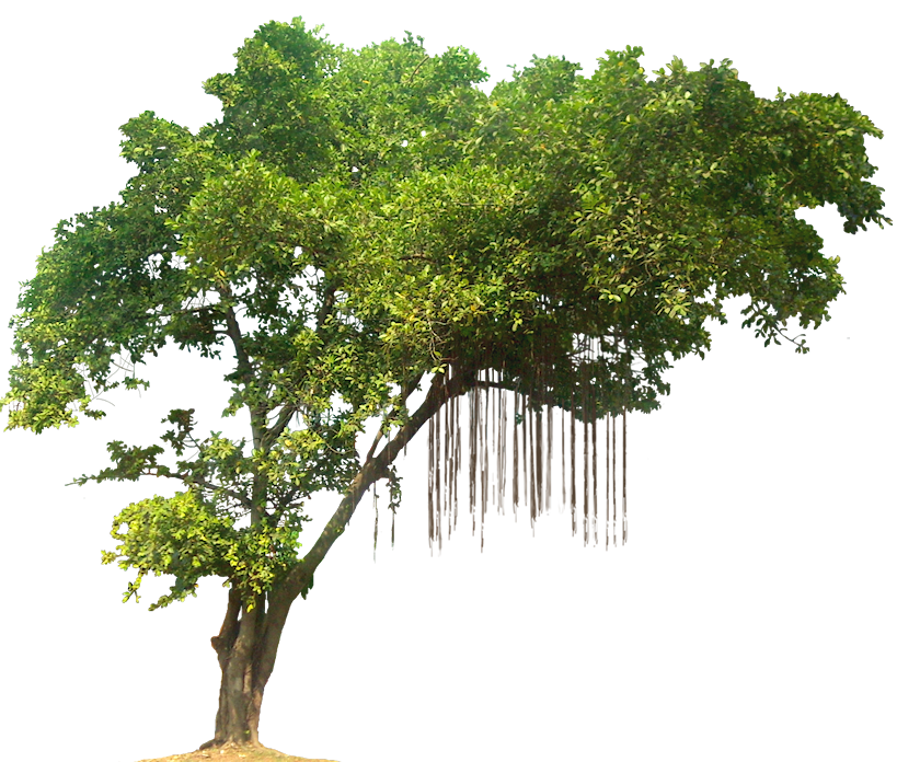 Tree HD PNG