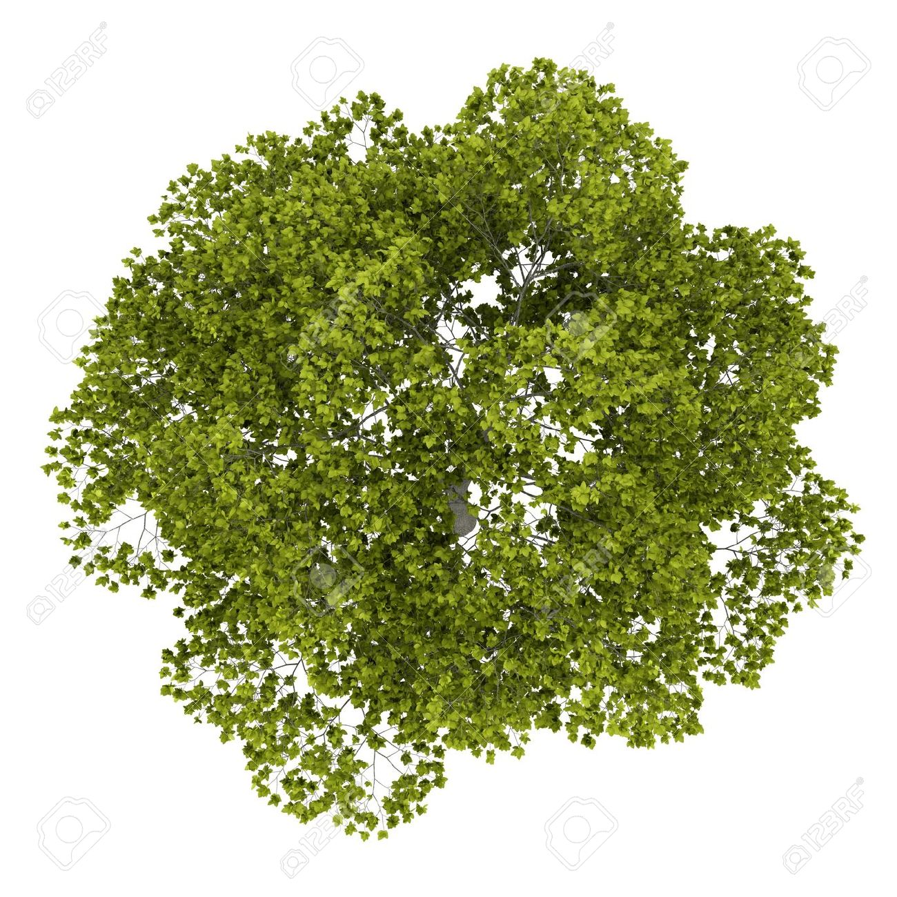 Tree Top Png image #4128