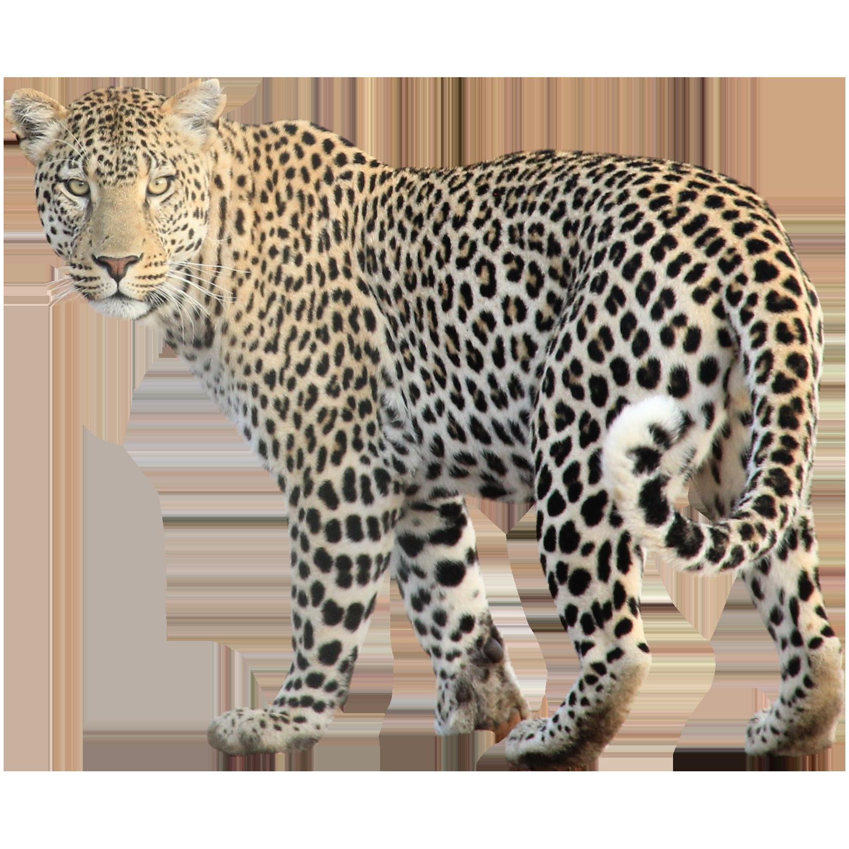 Wild Animals PNG