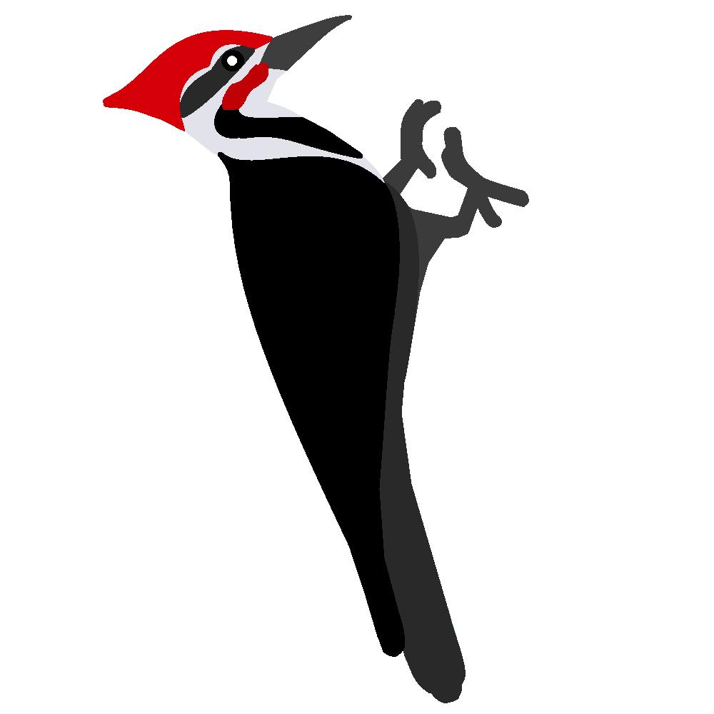 Woodpecker Bird Clip Art - Woodpecker, Transparent background PNG HD thumbnail