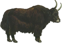 Yak Animal Png - . Hdpng.com Animals/ Mammals/ Bovines/ Yak.png, Transparent background PNG HD thumbnail