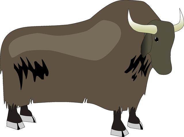 Yak Animal Png - Free Vector Graphic: Bison, Ox, Yak, Animal, Wildlife   Free Image On Pixabay   48640, Transparent background PNG HD thumbnail