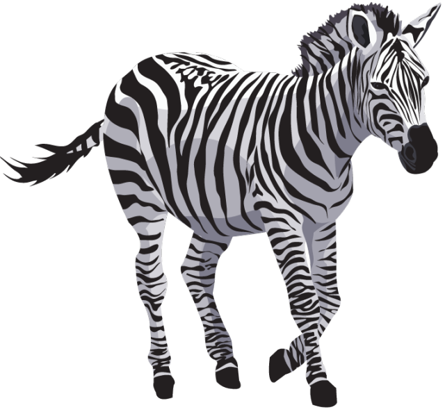 Zebra Png File - Zebra, Transparent background PNG HD thumbnail