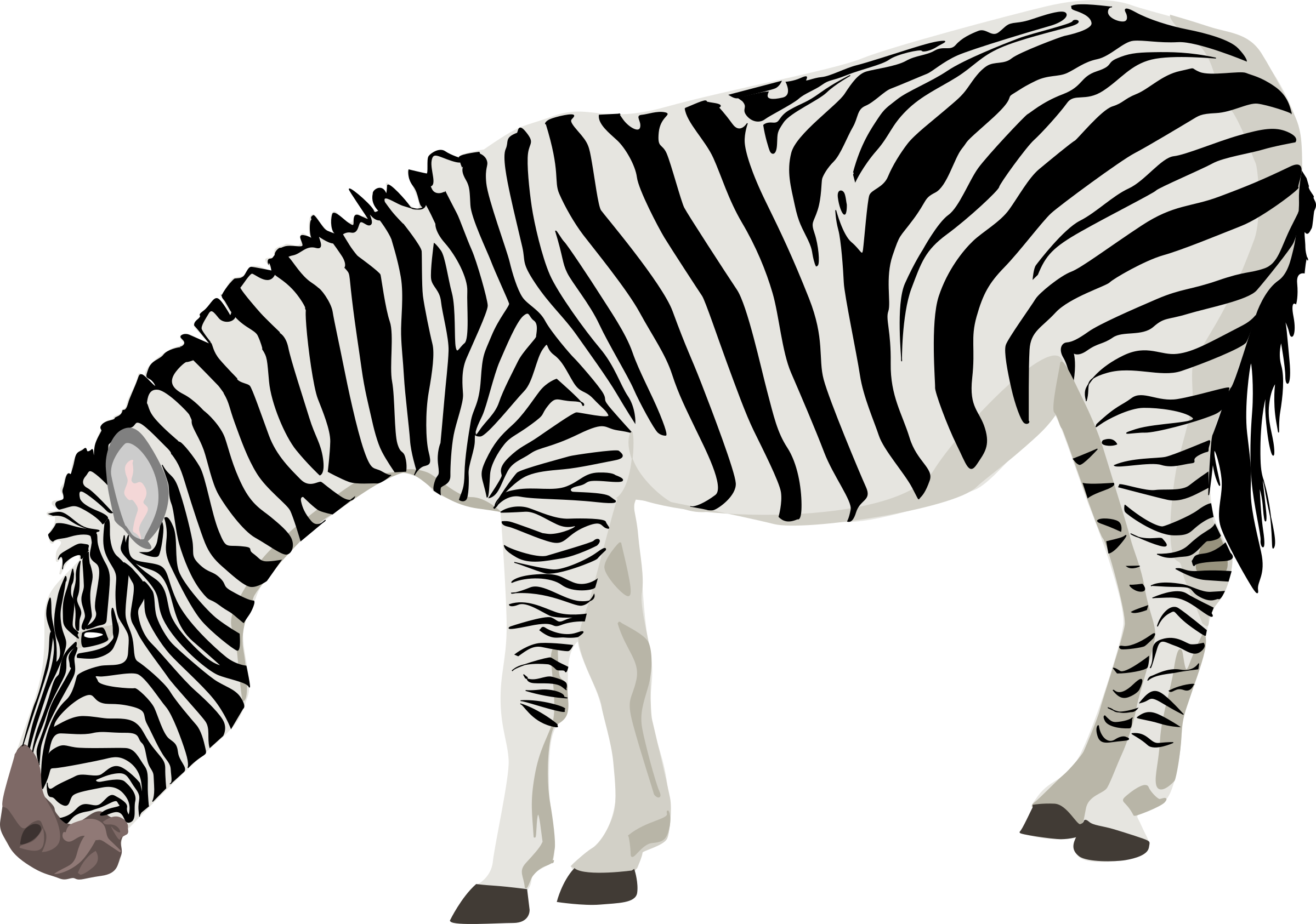 Zebra Png Photos - Zebra, Transparent background PNG HD thumbnail